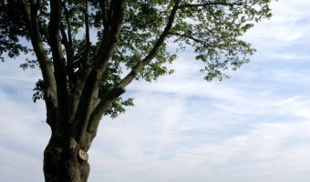 Friday Favorites: Summer Day in Southold