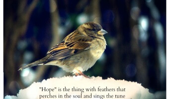 "Friday Favorites: ""Hope"" is the thing…"