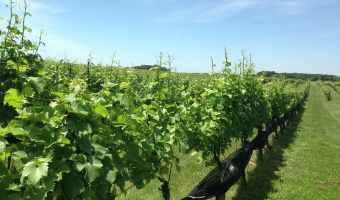 5 Essential North Fork Wineries