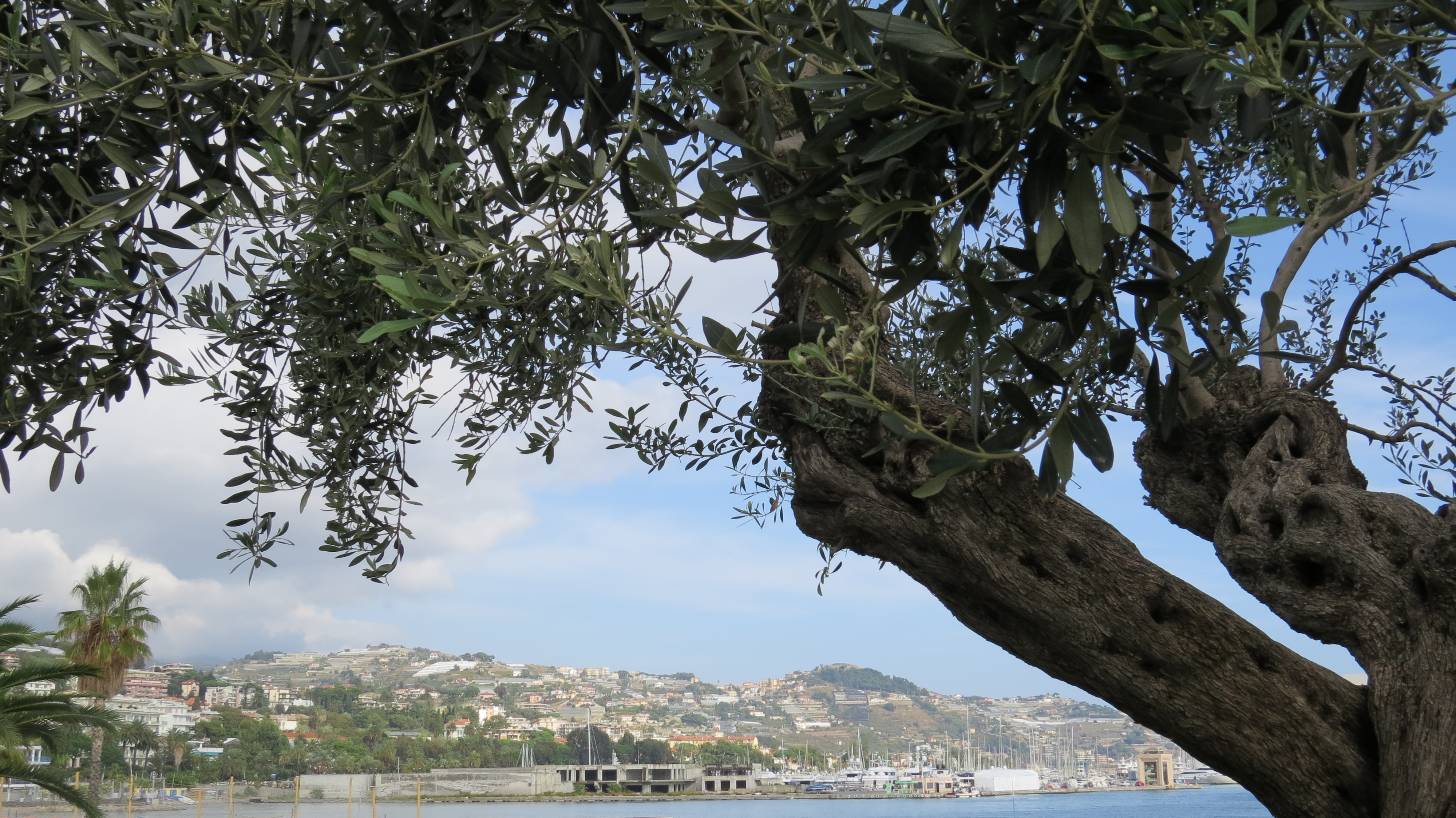 Sanremo tree over view