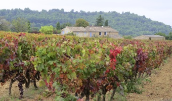 Wine Wednesday: Domaine La Suffrene Rosé