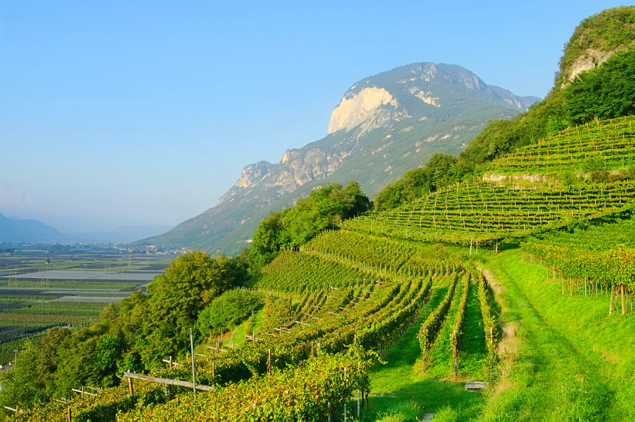 trentino mountain vineyard