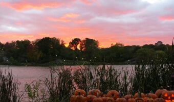 Snapshots: Pumpkin Flotilla in Central Park