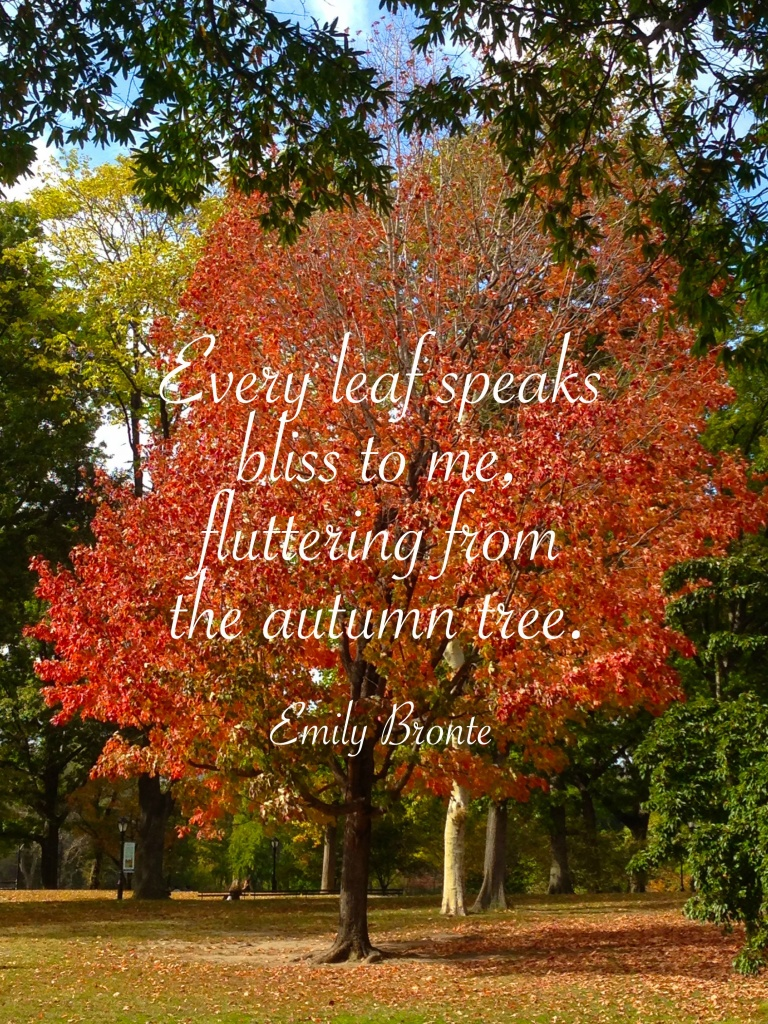 every leaf speaks to me fluttering down from the autumn tree. emily bronte