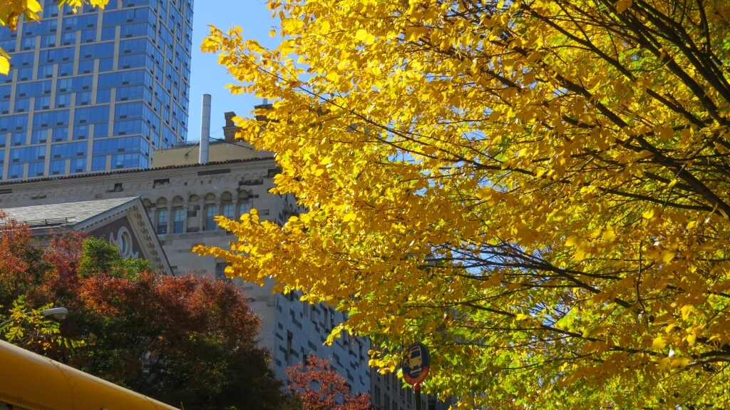 central park autumn new york vibrant yellow tree